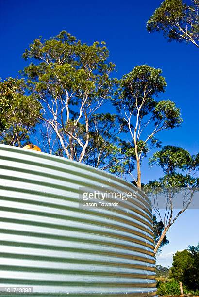 A corrugated stainless steel water tank surrounded by eucalyptus trees