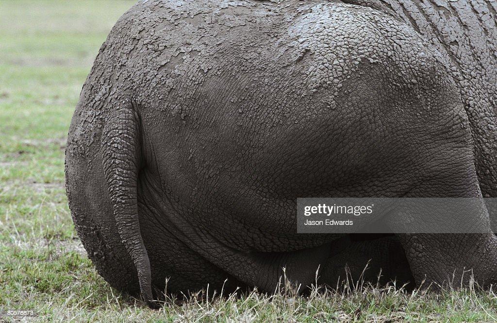 werribee-zoo-victoria-australia-picture-