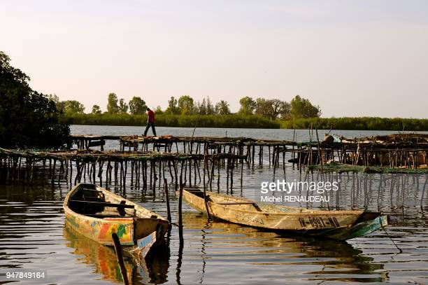 West Africa Senegal Sine Saloum Island Niodior Afrique de l'Ouest Senegal Sine Saloum ile de Niodior