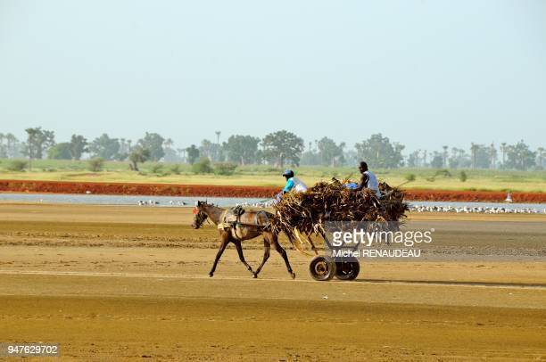 West Africa Senegal Sine Saloum Landscapes Afrique de l'Ouest Senegal Sine_saloum Paysages