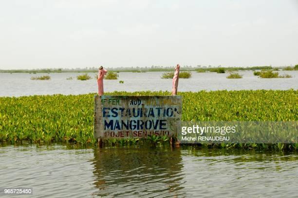 West Africa Senegal Sine Saloum Landscapes Afrique de l'Ouest Senegal Sine saloum paysage restauration de la mangrove