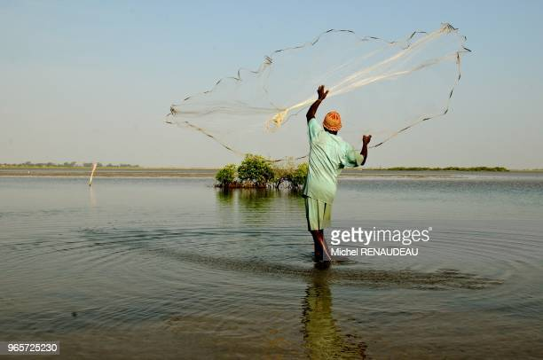 West Africa Senegal Sine Saloum landscapes fishing hawk Afrique de l'Ouest Senegal Sine_saloum Paysages peche a l'epervier