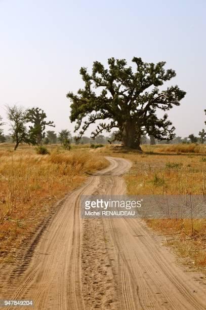West Africa Sine Saloum landscape bush Afrique de l'Ouest Sine Saloum paysage de brousse