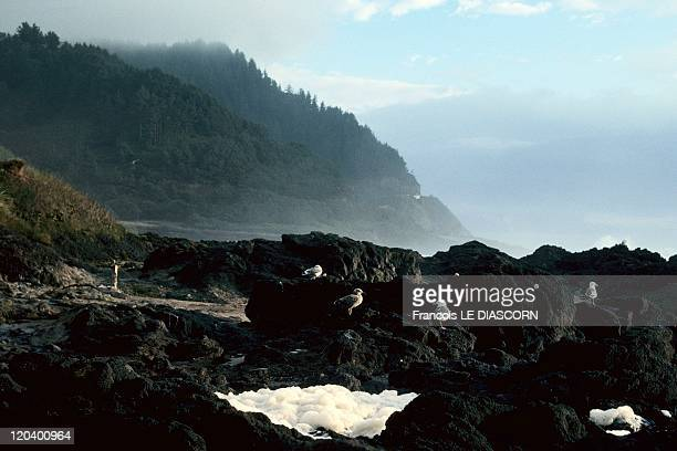 West Coast In Route 101 In Oregon United States In 1997 Route 101 called also in some parts Route 1Seagulls by spectacular coastline in Yachats