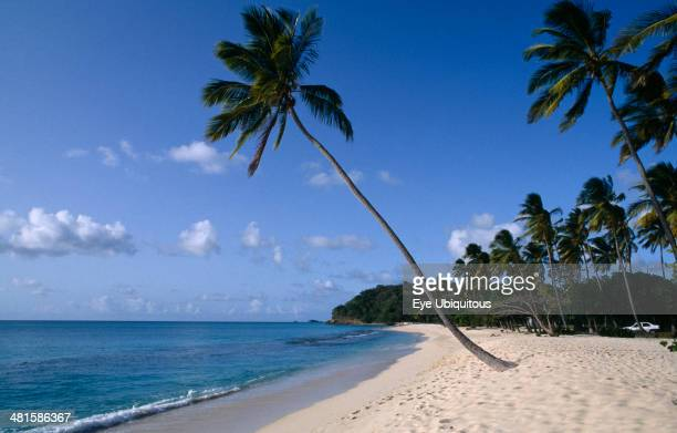 West Indies Antigua Darkwood Beach Sandy beach with clear blue sea water and palm trees behind