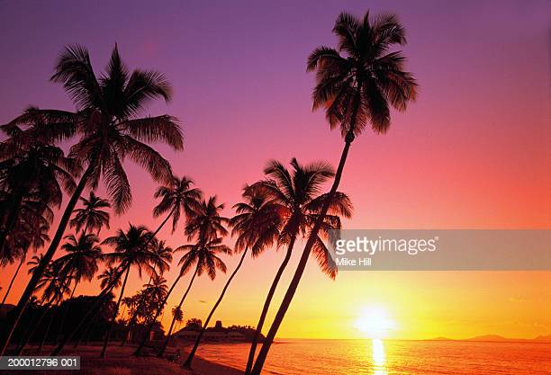 West Indies, Antigua, palm trees on beach, sunset