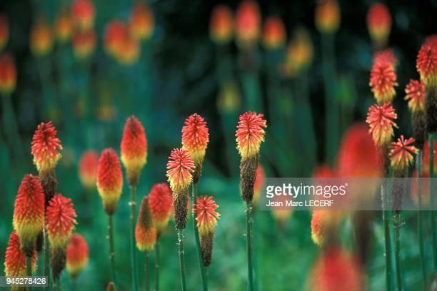West indies flora tropical flower flore fleur tropicale.