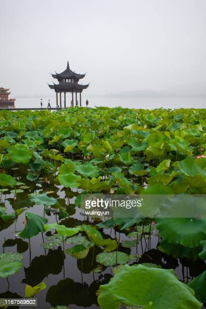 west lake with pavilion and lotus - west lake hangzhou stock pictures, royalty-free photos & images