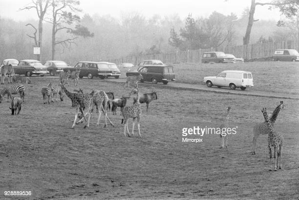 West Midland Safari and Leisure Park located in Bewdley Worcestershire England Opened in spring 1973 Picture taken 23rd April 1973