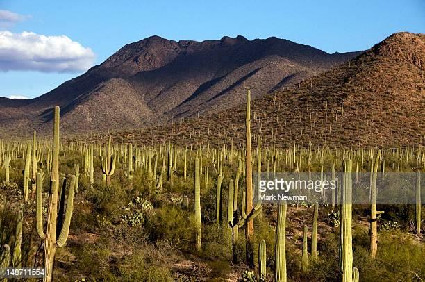 West Unit of Saguaro National Park.