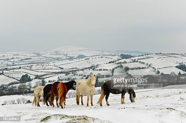 West Wales Winter.