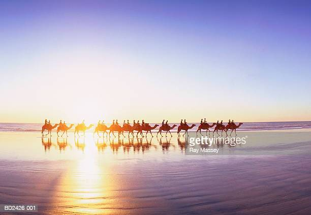 Western Australia, Broome, Cable Beach, train of camels at sunset