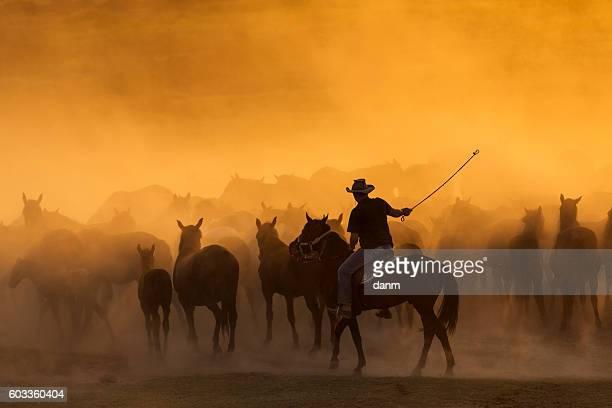 western cowboys riding horses, roping wild horses - 家畜柵 ストックフォトと画像
