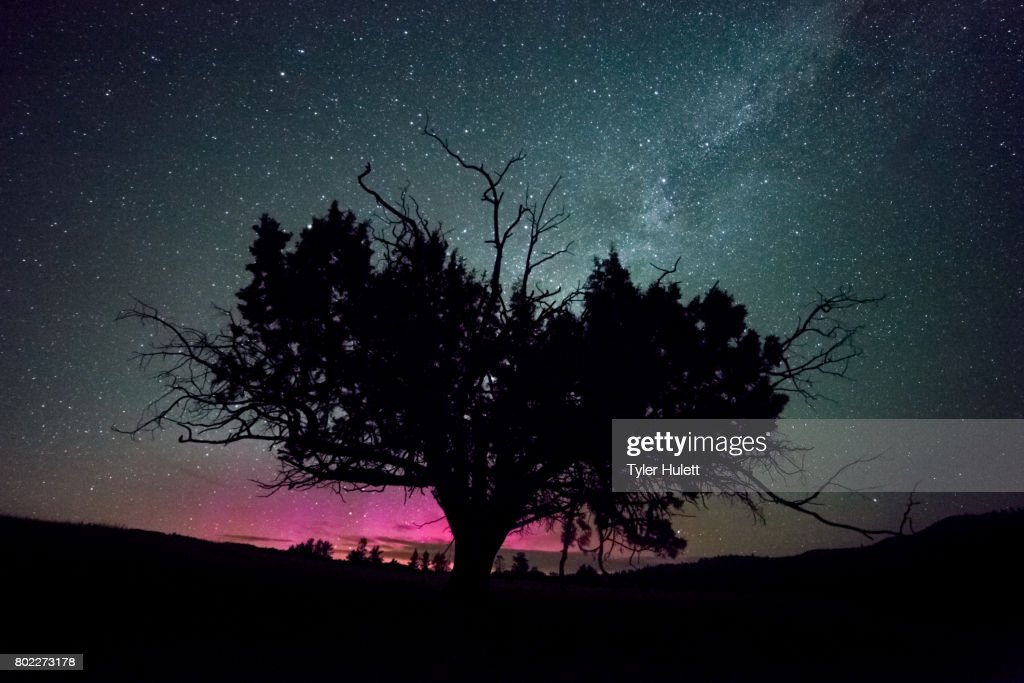 Western Juniper Tree and Pink Northern Lights with Milky Way : Stock Photo