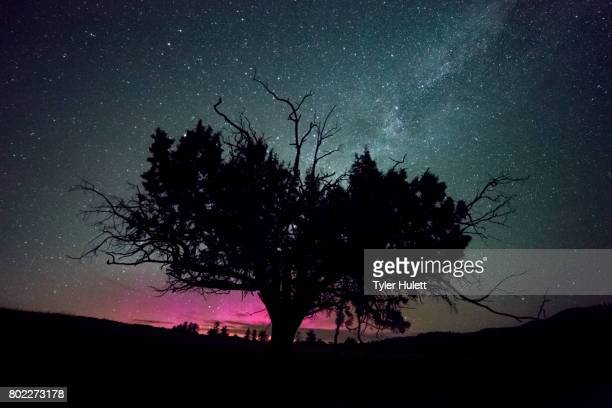 western juniper tree and pink northern lights with milky way - western juniper tree stock pictures, royalty-free photos & images