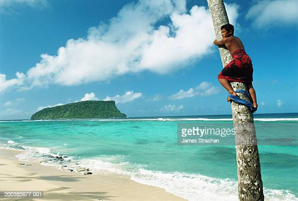 Western Samoa, Upolu Island, Lalomanu Beach, boy climbing coconut palm