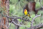 rocky mountain national park colorado usa