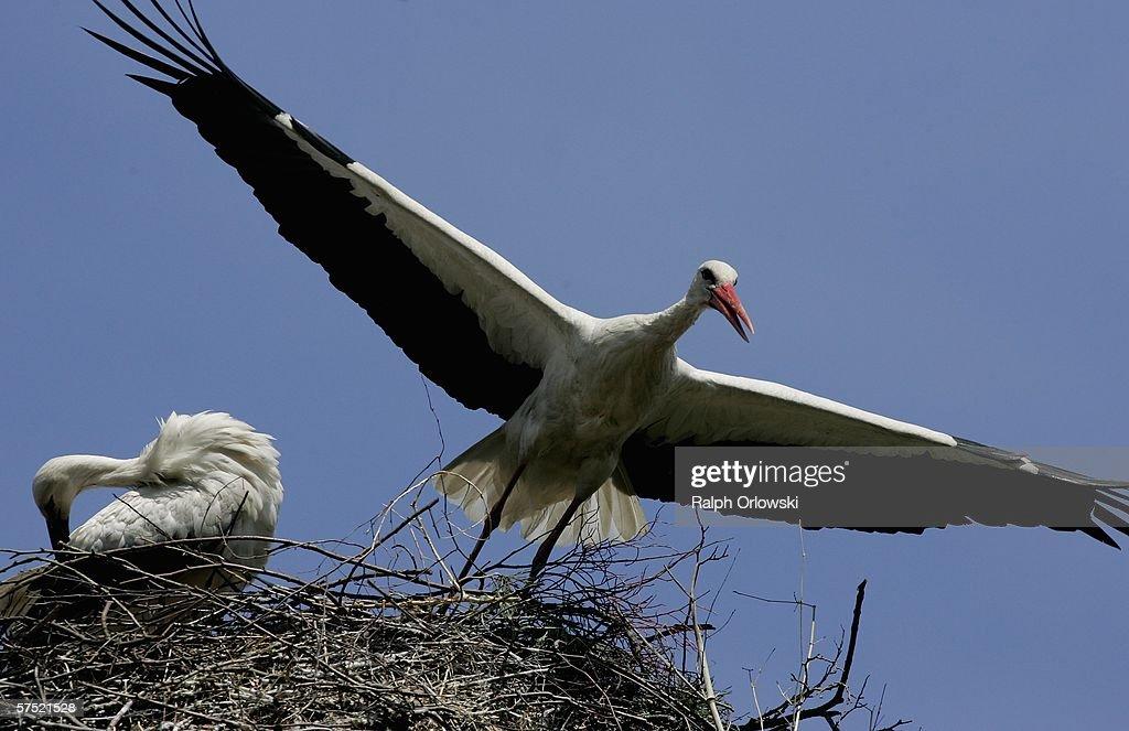 Birdpark Walsrode Prepares For Summer Visitors : News Photo
