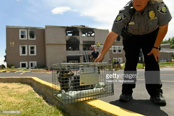 Westminster animal control officer Chris Branican puts a small Chihuahua down after she helped firefighters rescue it from a second story apartment...