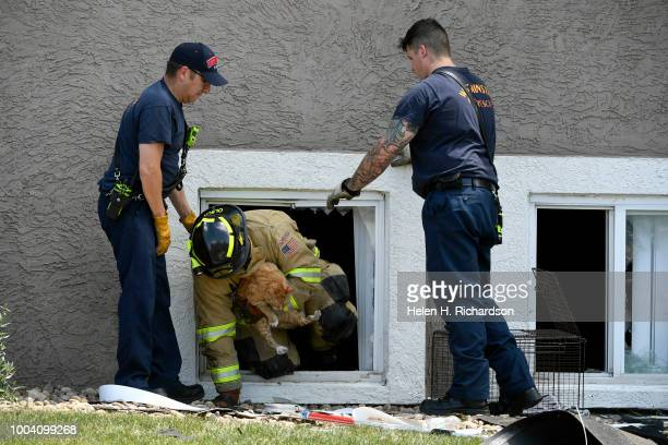 Westminster firefighter Nate Olson crawls out of a window as he and other firefighters rescue a cat from an apartment at the scene of a deadly...