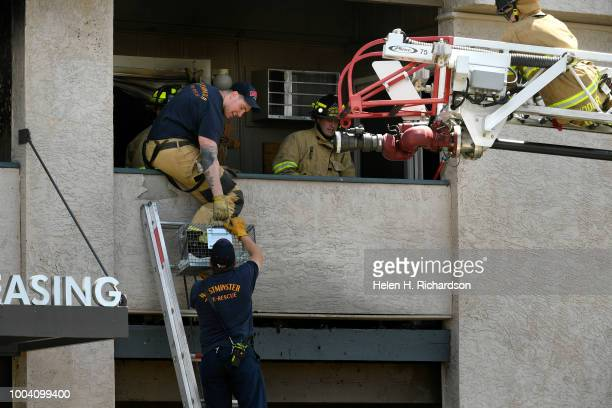 Westminster firefighters carefully take a small Chihuahua out of a second story apartment after it survived a deadly apartment complex fire at the...