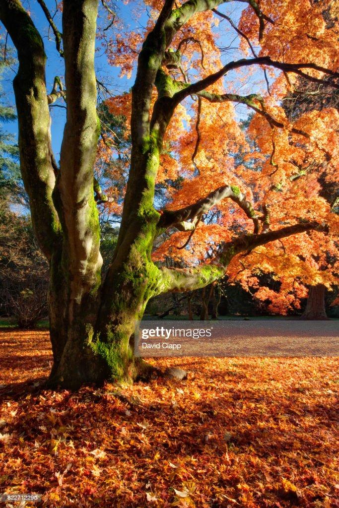 Westonbirt Arboretum, Gloucestershire : Stock Photo