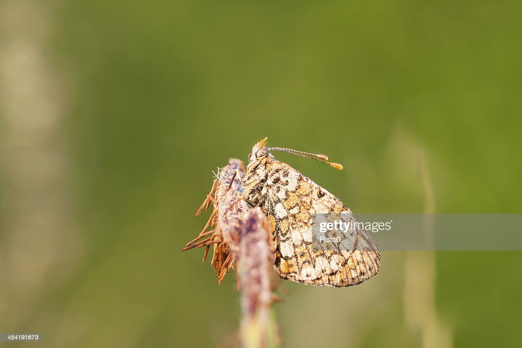 Wet brown butterfly : Stock Photo