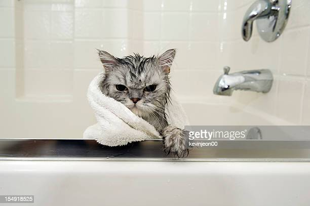 wet cat - wet stock pictures, royalty-free photos & images