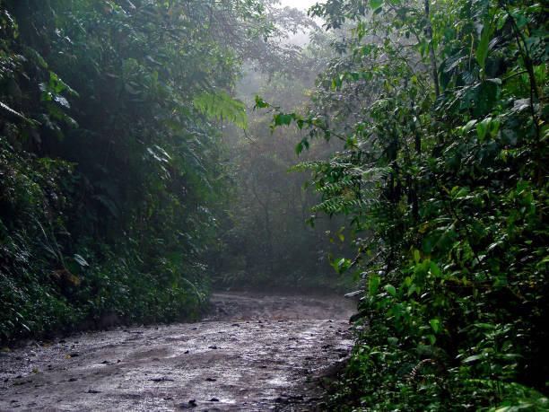 Wet Dirt Road in Jungle Forest in Mindo, Pichincha / Ecuador
