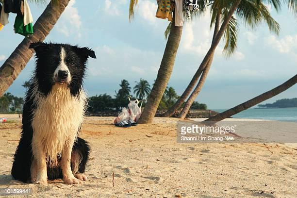 wet dog - nee nee stock photos and pictures