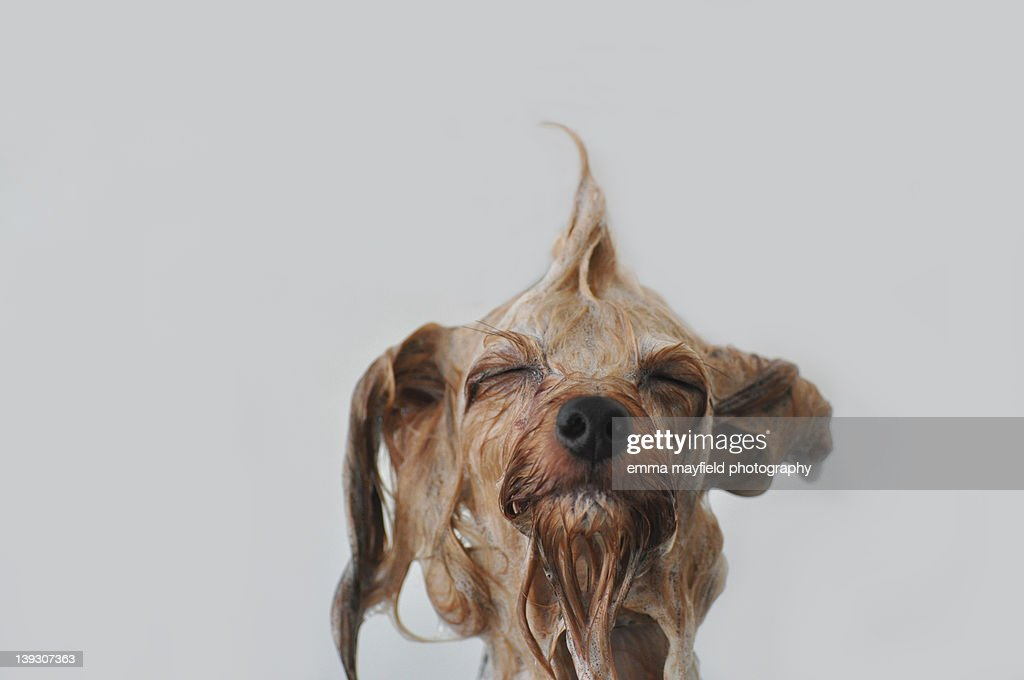 Wet dog : Stock Photo
