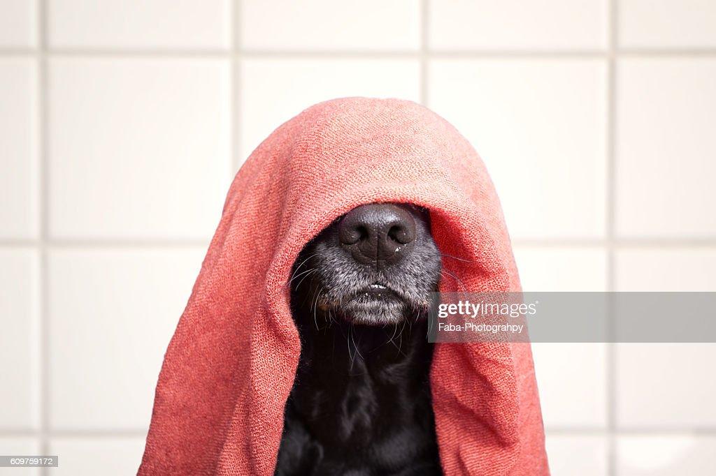 Wet dog : Stock Photo