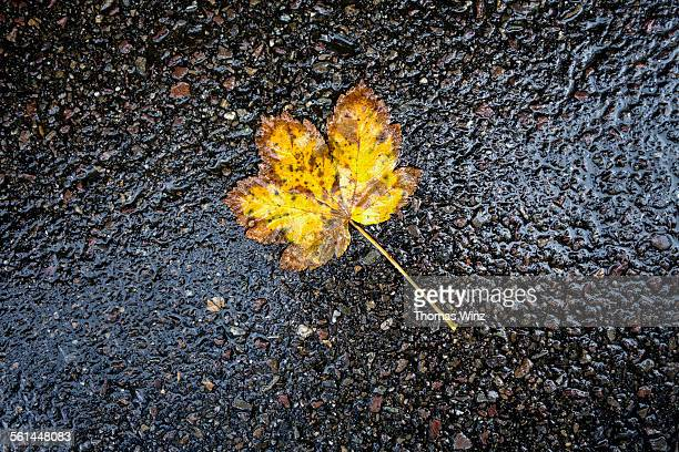 Wet fall leaf on a road