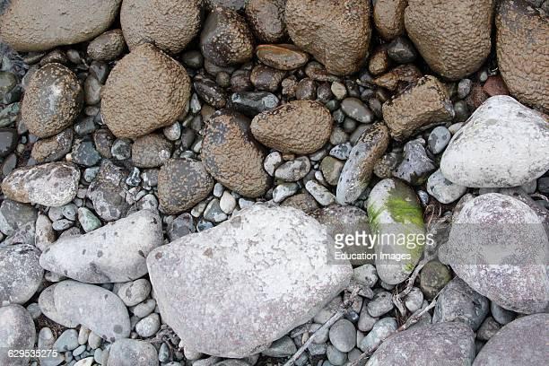 Wet glacial silt dry glacial silt Klutina River Wrangell St Elias National Park Alaska