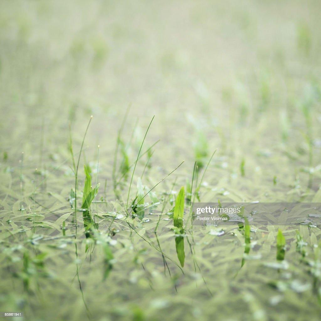 wet grass : Stock-Foto