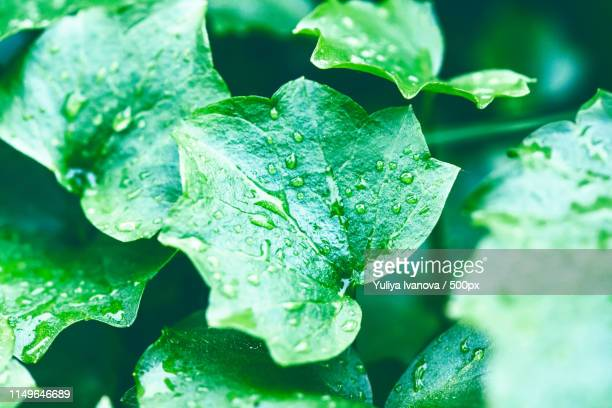 wet green - emerald green stock pictures, royalty-free photos & images