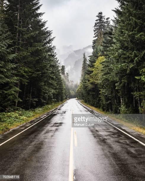 wet highway in strathcona-westmin provincial park, vancouver island, british columbia, canada - nat stockfoto's en -beelden