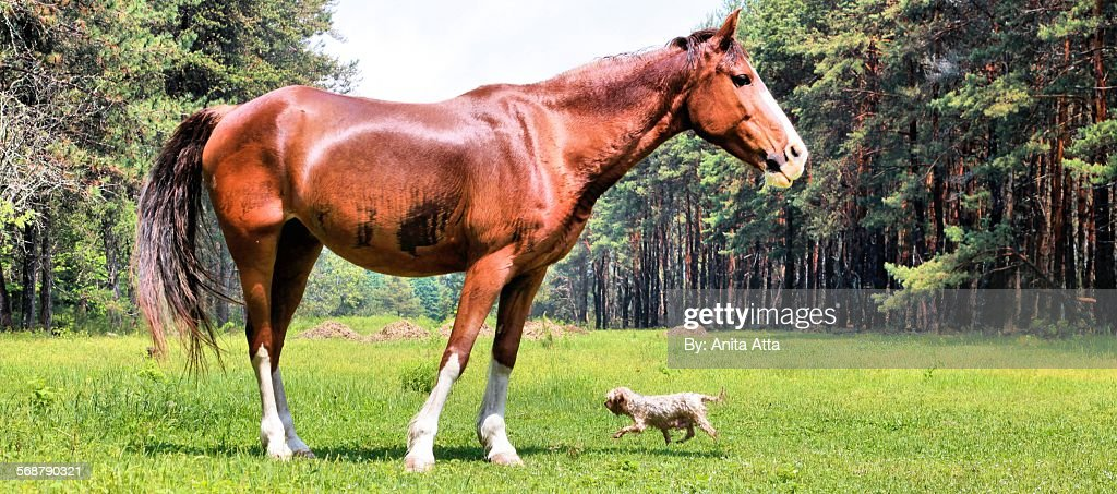 Wet Horse and Yorkshire Terrier in field : Stock Photo