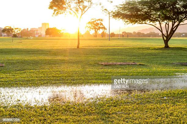 wet lawn after rain in sunlight - port of spain stock photos and pictures