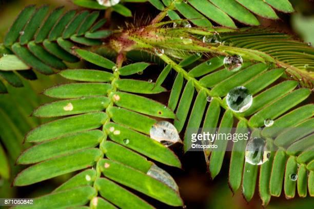 Wet Leafs of Wild Plants