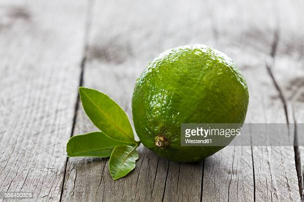 Wet lime with leaves on wood