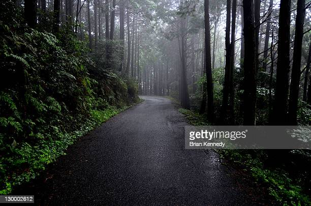 Wet paved road