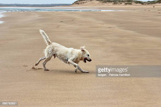 wet pets - rattray head stock pictures, royalty-free photos & images