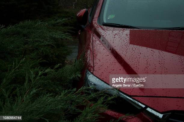 Wet Red Car Parked By Plants During Rainy Season