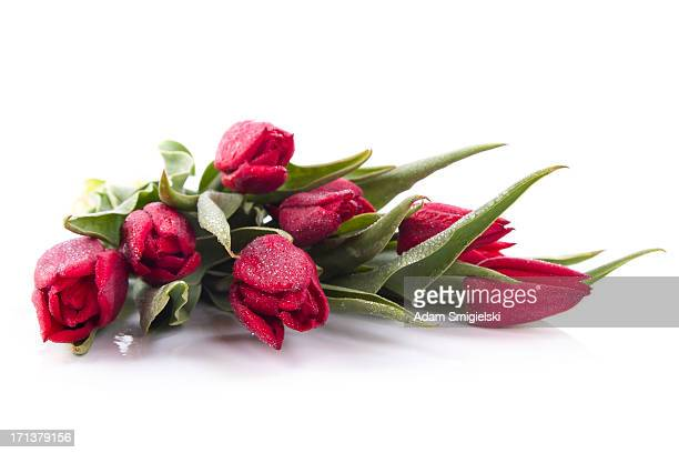 wet-Rote Tulpen