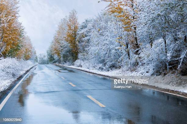 wet road lined by winter trees - jahreszeit stock-fotos und bilder