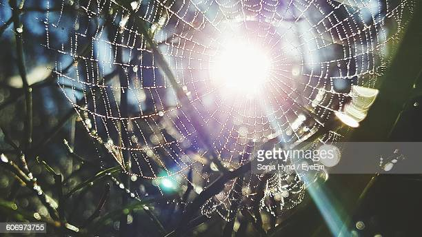 Wet Spider Web On Plants During Sunny Day