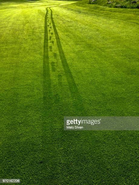 wet tracks on golf course - golfplatz green stock-fotos und bilder