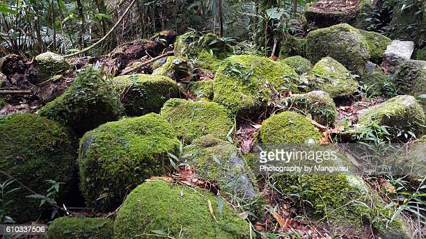 Wet Tropics Bioregion