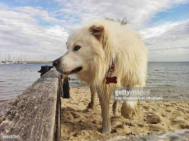 Wet white dog on beach with boats